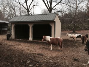 Caring for your horses in the winter