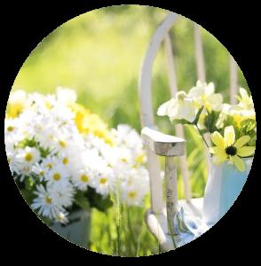 outdoor daisies