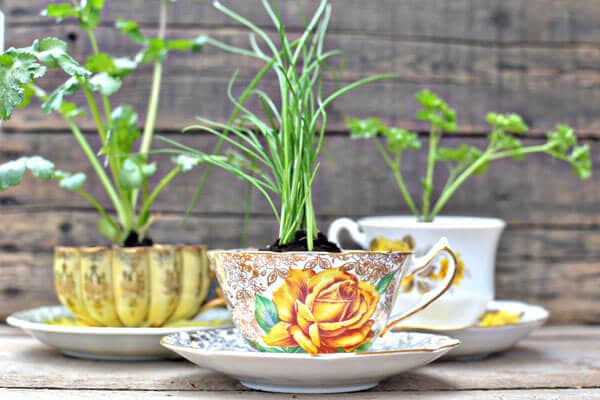 teacup herb garden