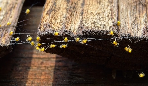 spider nests